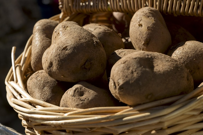 Ako sadiť zemiaky s rozumom